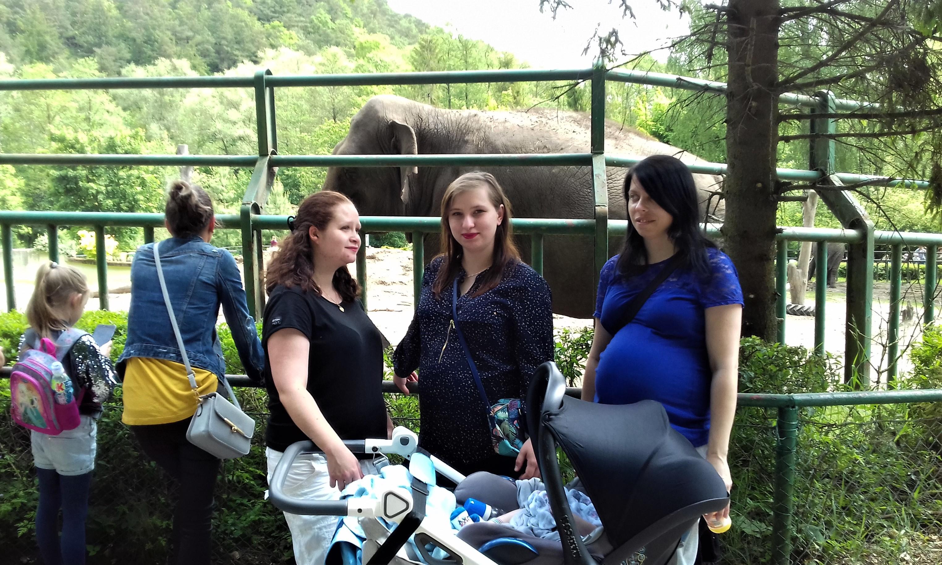 Matki z dziećmi na tle słonia w ZOO